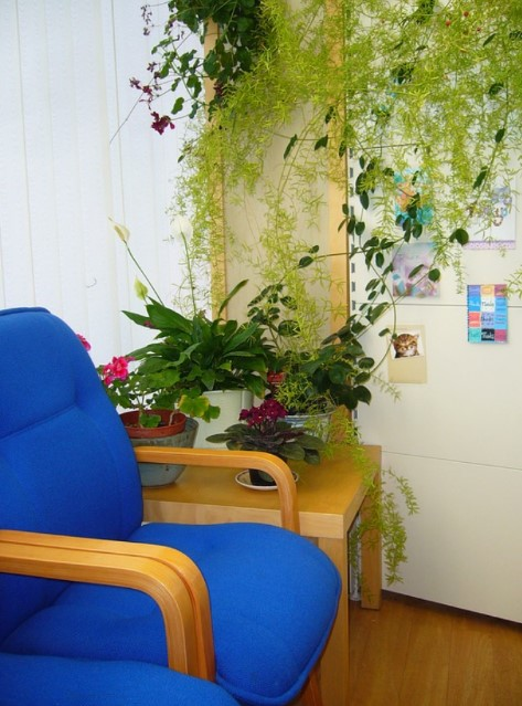 Plants add a splash of colour to your waiting area and promote a healthier, cleaner living space.